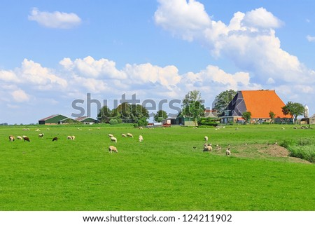 Sheep and poultry grazing in a meadow near the Dutch farm - stock photo