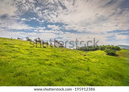 Sheep Farm - stock photo