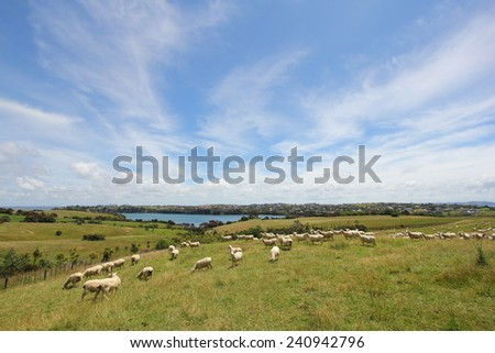 Sheep grazing on farmland on a cloudy day - stock photo