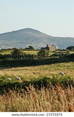 sheep head, ireland - stock photo