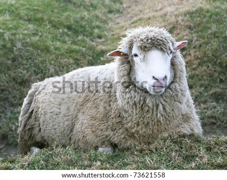 sheep in autumn field - stock photo