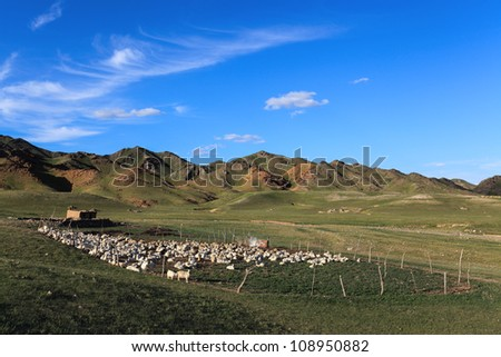 sheep in sheepfold on mountain slope at dusk,inner mongolia,China