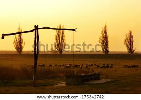 Sheep in the ranch at Sundown, Sheep sunset in Europe - stock photo