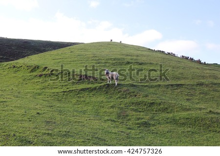 sheep on the green hill