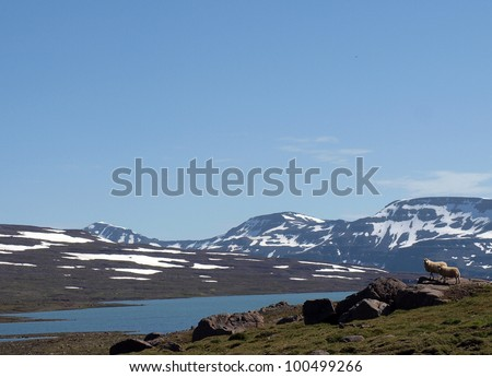 Sheep on the lake shore in Iceland - stock photo