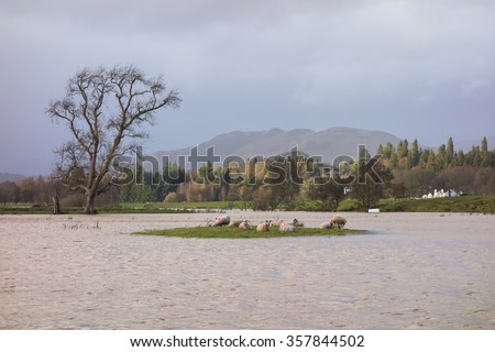 Sheep stranded on an island surrounded by flooded fields - Drymen, Scotland - stock photo
