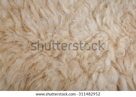 Sheep wool texture background  - stock photo