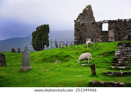 Sheeps grazing in the Scottish highlands - stock photo