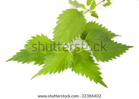 Sheet of young nettles on white background - stock photo