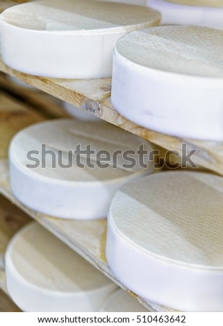 Shelf of young Gruyere de Comte Cheese in maturing cellar in Franche Comte dairy in France