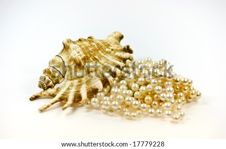 Shell and pearls on light background