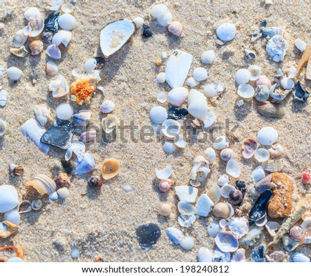 Shell Beach background