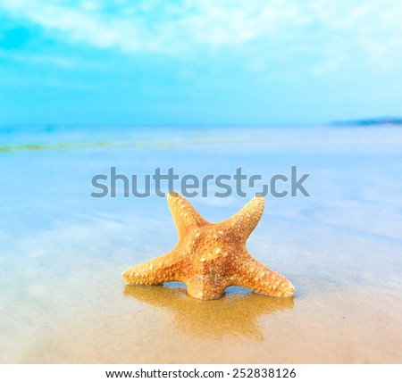 Shell Beach Fish  - stock photo