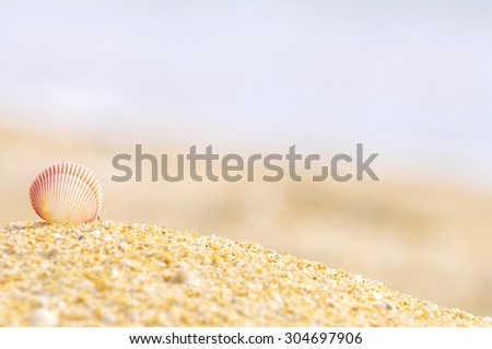 shell clam on the sand at the beach with copy space area - stock photo