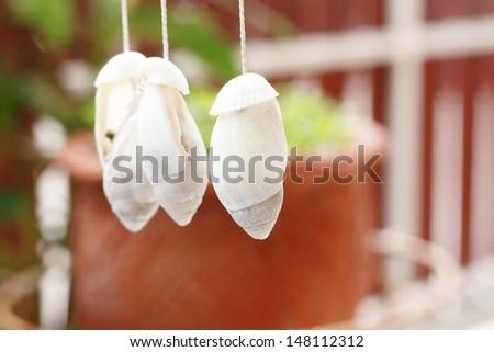 shell decoration  - stock photo