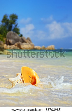 Shell in a ocean surf on the granite rocky beaches, Seychelles islands. La Digue, Source D'Argent