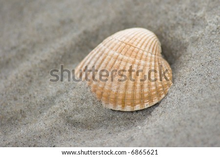 Shell in the sand - stock photo