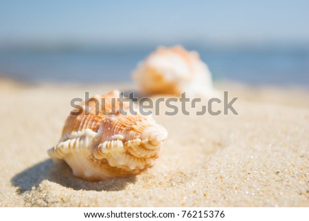 Shell in the sand at the beach, focus on the shell. - stock photo