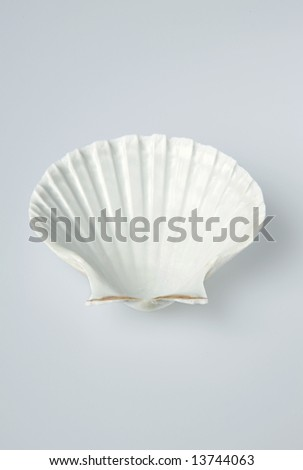 Shell isolated on light background