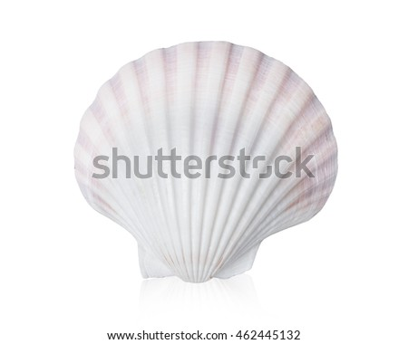 Shell  isolated on white background with clipping path.