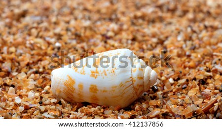 Shell of cone snail on sand in sunny day