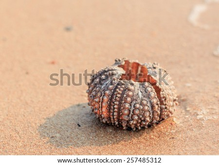 shell of the sea urchin on the beach - stock photo