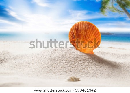 Shell on a beach side with blue sky sunny day summer concept. - stock photo