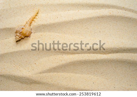 Shell on a wavy sand background - stock photo