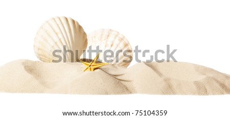 shell on beach isolated on a white background, personal editing soft glow - stock photo