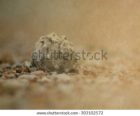 shell on beach - retro style picture - stock photo
