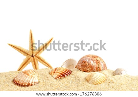 Shell on sand. Summer background, isolated on white.