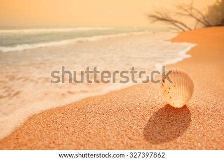 Shell on sunset beach - stock photo
