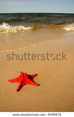 Shell on the Beach - stock photo