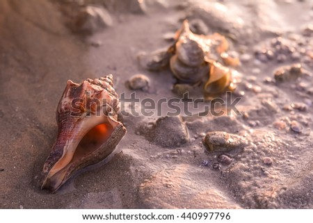 shell on the beach in low tide - stock photo