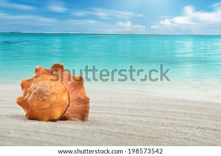 Shell on the beach, sea and clouds - stock photo