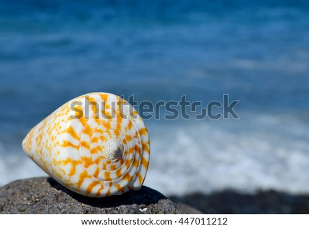 Shell on the pebble beach with the ocean in the background.Summer or vacation concept.Selective focus.Copy space. - stock photo