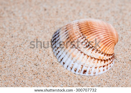 Shell  on the  sand, sea mood  background, vacations wallpaper.  - stock photo