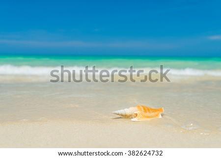 Shell on the tropical  beach - stock photo