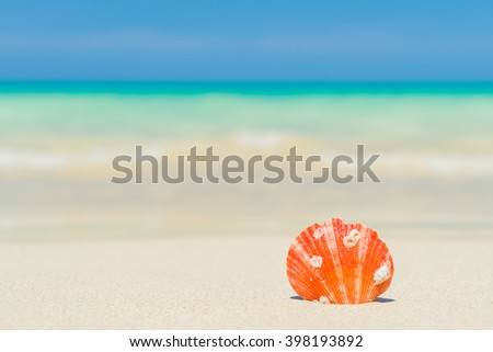 Shell on the white sand beach - stock photo