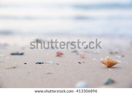 Shell on tropical beach in Asia, Thailand. selective focus. - stock photo
