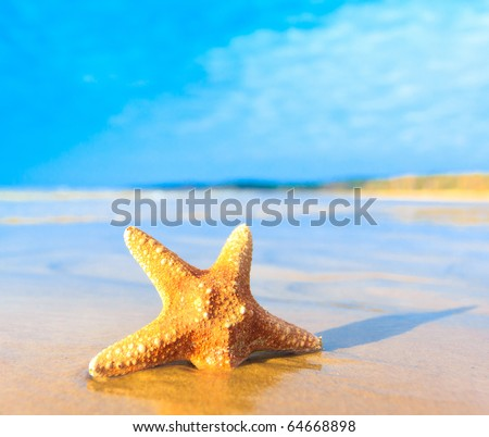Shell Sea Star - stock photo