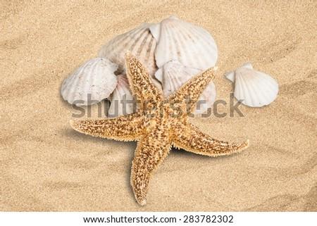 Shell, Starfish, Summer. - stock photo