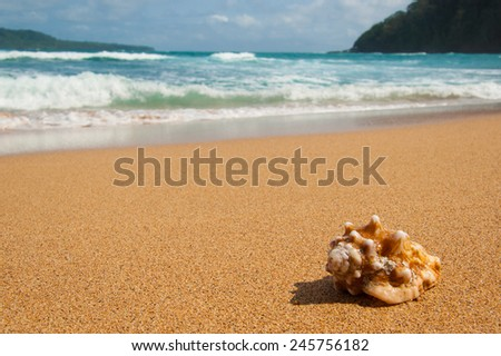 Shell washed up on a remote sandy beach. Sea and waves in the background - stock photo