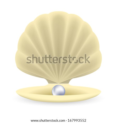 Realistic Mother Pearl Shell Pearl Shadow Stock Vector ...