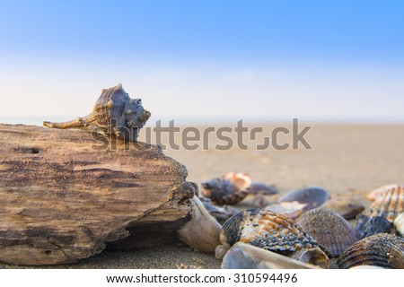 shells and pieces of wood, with the beach in the background