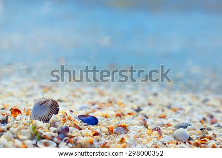 Shells and sand on Black Sea beach - stock photo