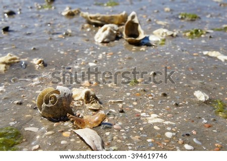 Shells At Low Tide