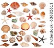 Shells collection - stock photo