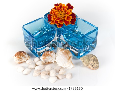 shells, flowers in glass on white background