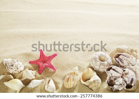 Shells in sand. - stock photo